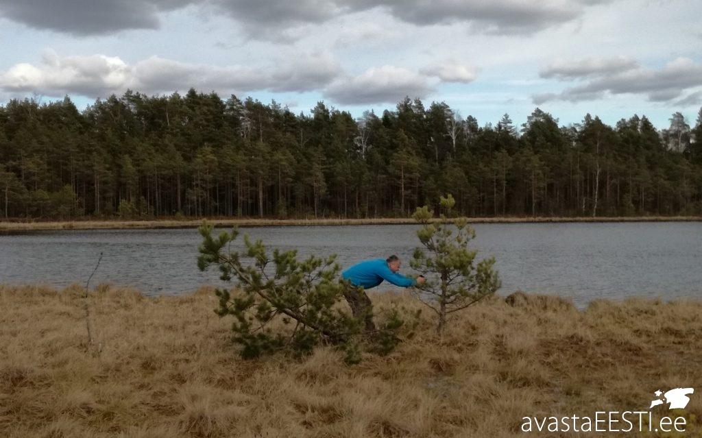 Pingu järv (Marko Kaldur)