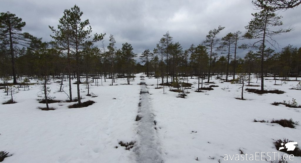 Šokeeriv Ida-Virumaa edasijõudnutele (Marko Kaldur)